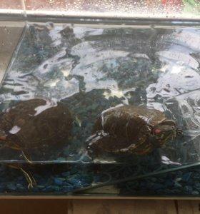 Черепашки вместе с террариумом