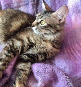 кошка молодая стерилизованая