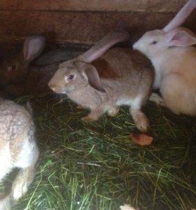 Продам кроликов на мясо/или живьем.