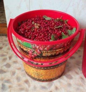 Красная смородина 10 л