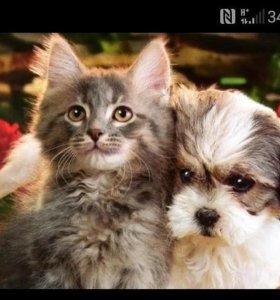 Выгул, передержка собак и кошек