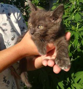 Котенок ищет семью!)