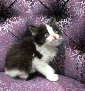 Котёнок, котик ищем семью