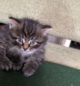 Котёнок кошка