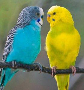 возьму попугайчика