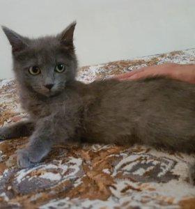 Кошечка красавица в добрые руки)