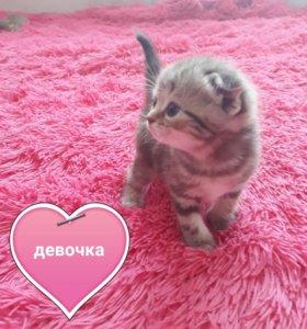 Вислоухие котята 9 шт