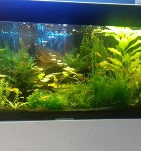 Ремонт и изготовление аквариумов