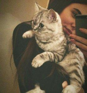Продам Вислоухую Кошку