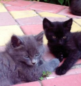 Красивых котят в любящий дом