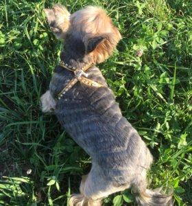 Новая шлейка для собак 🐶 в стразах 💎💎💎«Гламур»