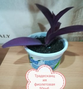 Укорененные отводки комнатных растений