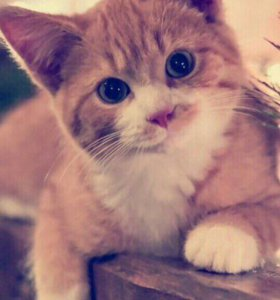 Кот-кошка