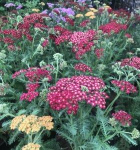 Садовник !Сервисное обслуживание садовых участков