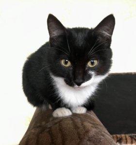 Котик 5 мес ищет новый дом и заботливых хозяев