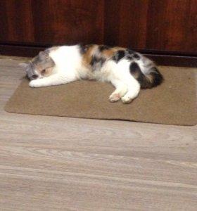 Кошки ищут новый дом