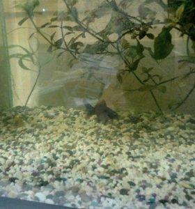 аквариум 80 литров