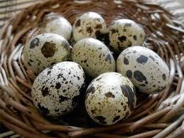 Яйца перепелиные