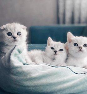 Продаём своих котят