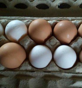 Домашние куриные и утиные яйца(инкубационное)