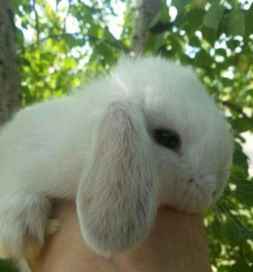Декоративные крольчата Распродажа!!!