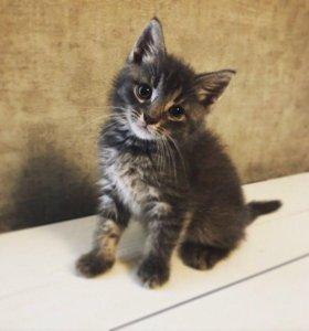 Котёнок Паша в добрые руки
