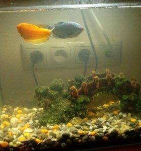 Аквариум с двумя рыбками