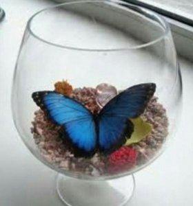 Живая бабочка в стекле