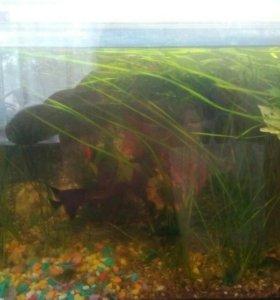 Продам аквариум 120л. Рыбы, растения, фильтр