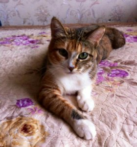 Кошечка-подросток ищет дом.