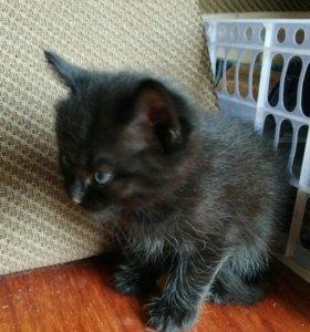 Котята черные, начали сами кушать