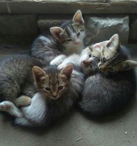 Котята крысоловки в добрые руки
