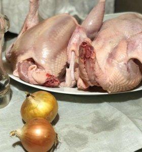 Кура,утка,Индюк,кролики мясом.Акцент на качестве.