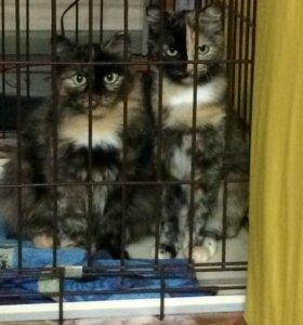 Кошки в частный дом