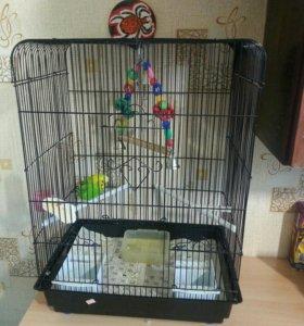 Отдам волнистого попугая