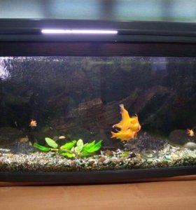 Аквариум с золотыми рыбками