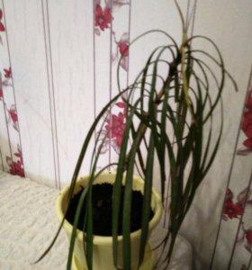 Драцена и кактус