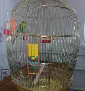 Папугай с большой клеткой