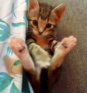 В добрые руки девочка 1,5 месяца,к лотку приучена