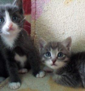 Две кошечки,три котика