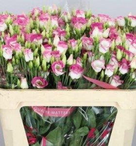Цветы - Розы, Тюльпаны,Хризантемы,Гвоздики по опту