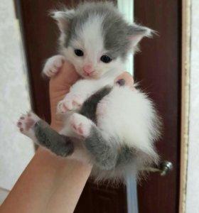 Котёнок спасенный ищет добрые руки