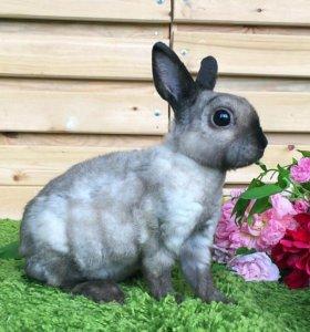 Карликовый крольчонок рекс