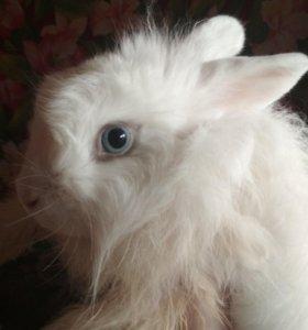 Декоративные кролики даром, в хорошие руки