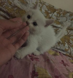Котята(мальчики) 4шт