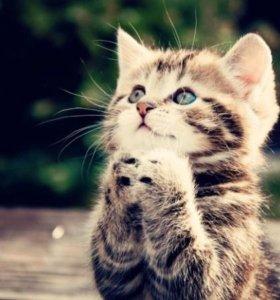 Отдам котят в добрые руки.