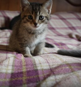 Котёнок-девочка от кошки-мышеловки