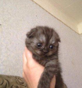 Милые плюшевые котята
