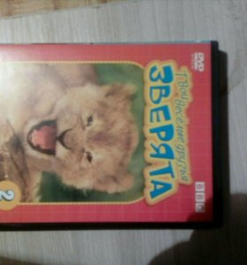 Познавательное видео про львов