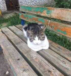 Грустный но ласковый и добрый котик в дар